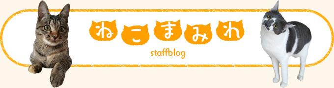 スタッフブログ「ねこまみれ」